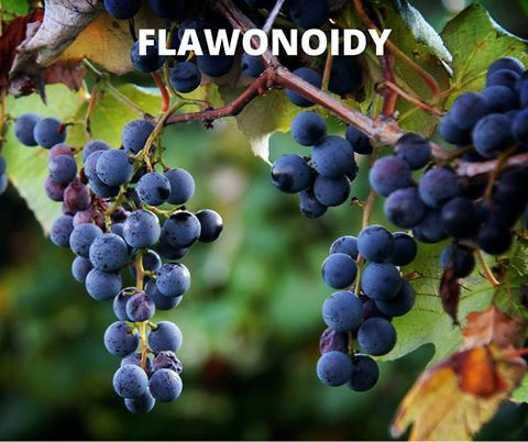 flawonoidy